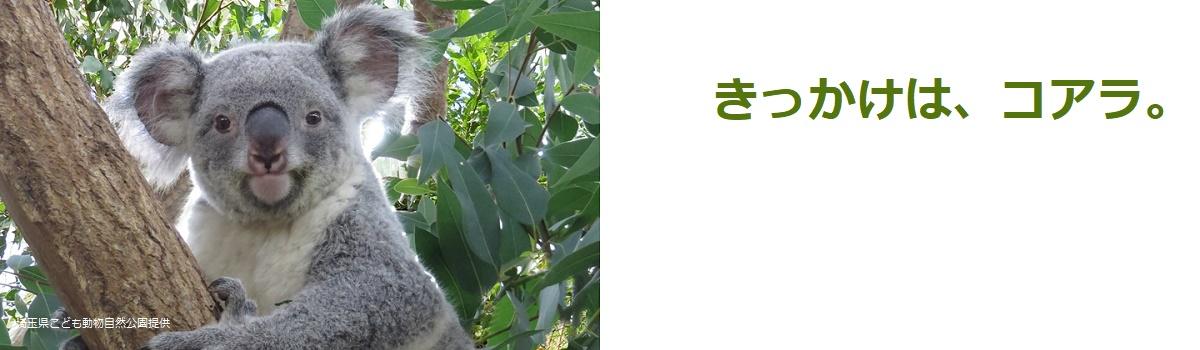 有限会社加藤ファーム|きっかけは、コアラ。