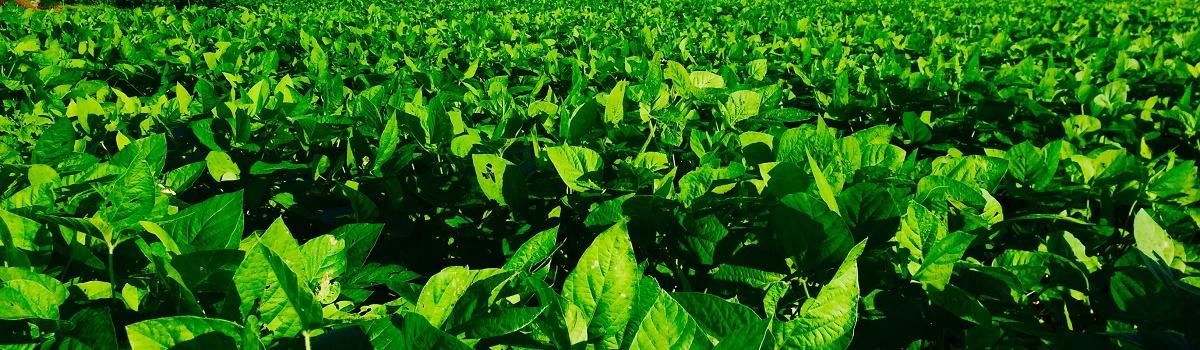 有限会社加藤ファーム|循環型自然農法